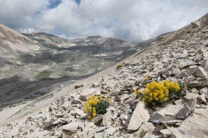 Bio Blitz alla scoperta della Biodiversità sulla Majella e sul Gran Sasso