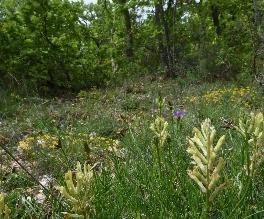 Indagine internazionale sulla biodiversità delle praterie abruzzesi