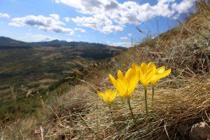 Ultimi giorni del contest fotografico nel Parco Nazionale della Majella