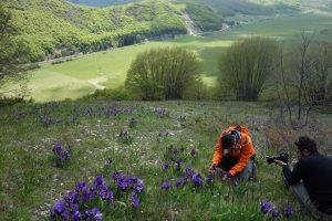 Le meravigliose fioriture di <i>Iris marsica</i>
