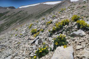 Nuovi dati scientifici sulle specie Floranet