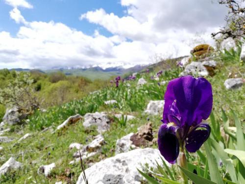 Di Gesualdo Leonora - Iris marsica - Barrea 2