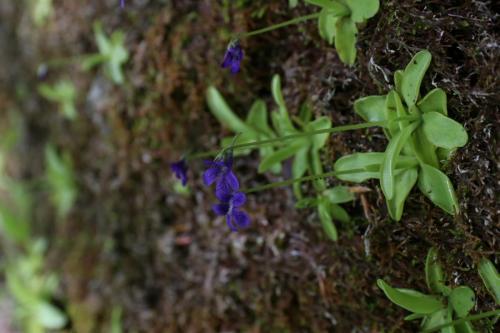 "Visita del ""Conservatoire Botanique National Alpin"" (CBNA)"