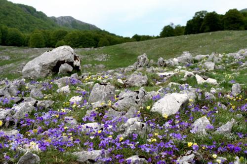 Iannucci Daniele - viole - Coppo del Lepre